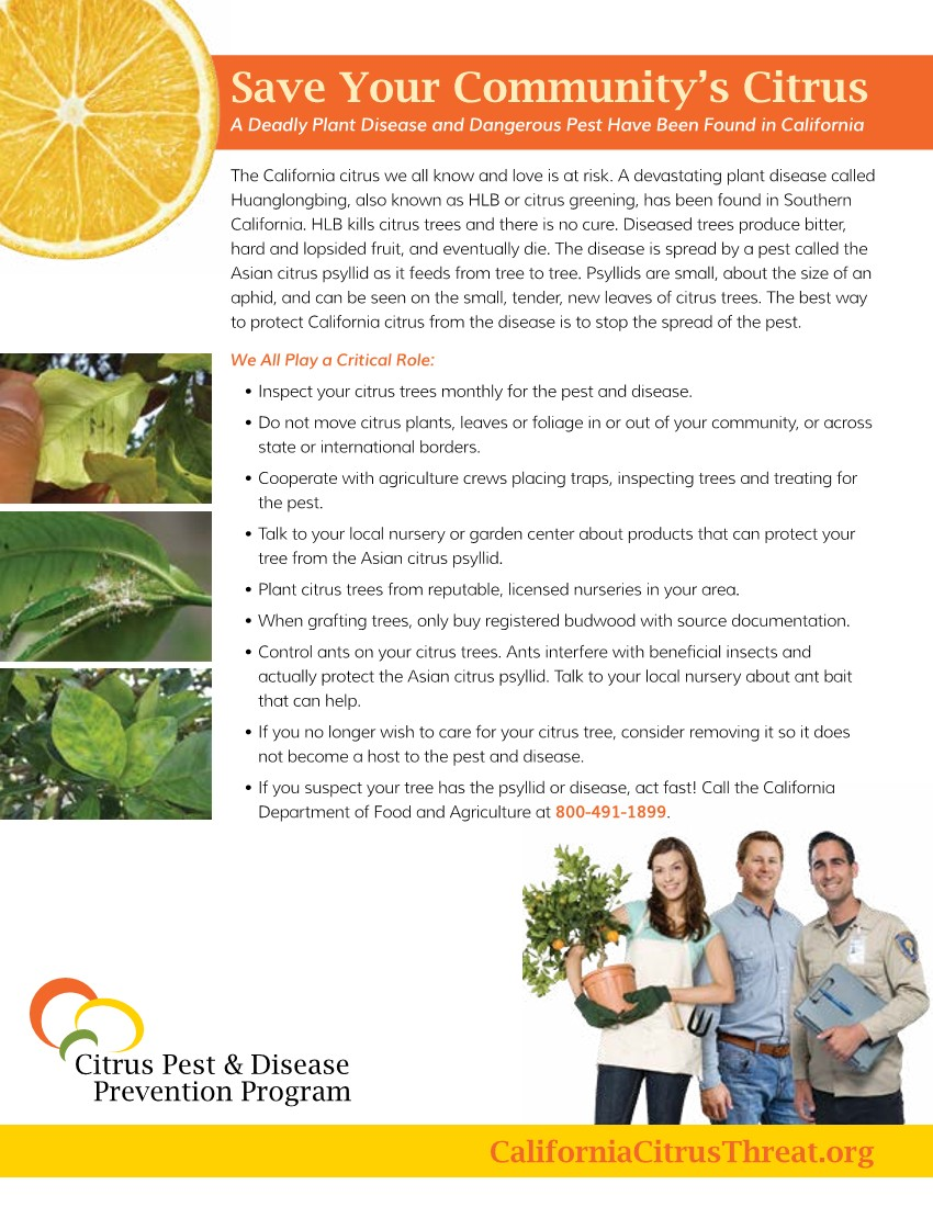 Citrus tree flyer
