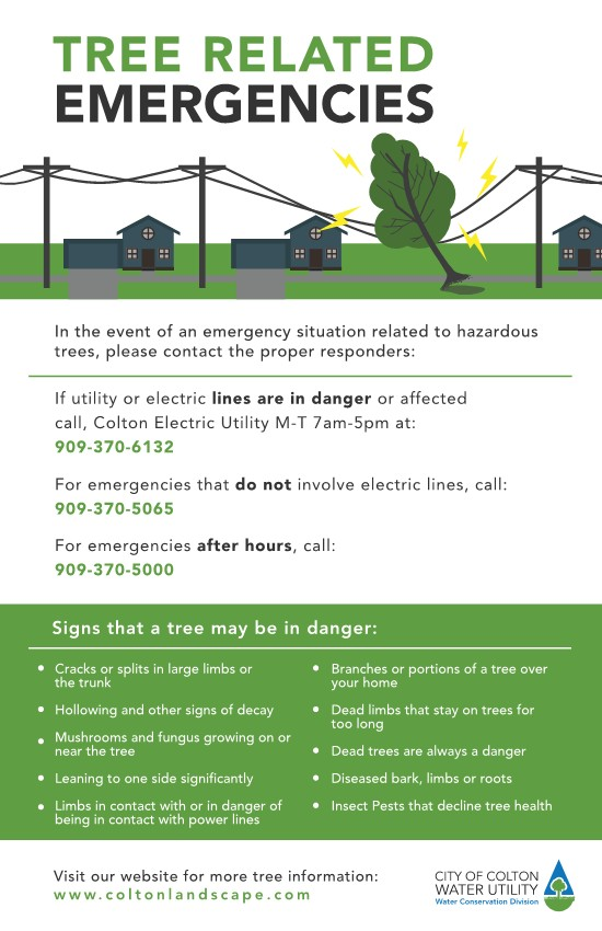 Tree emergency j.jpg